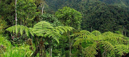 Bergregenwald im Intag in Ecuador