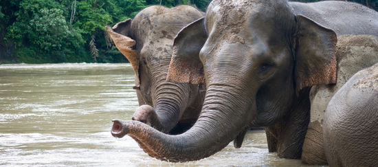 Elefanten nehmen ein Bad im Fluss