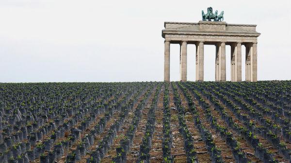 Fotomontage: Das Brandenburger Tor steht zwischen Reihen mit Ölpalmsetzlingen
