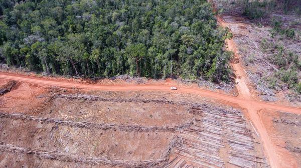Luftbild: Rodung für Palmölplantage der Firma Korindo in Papua