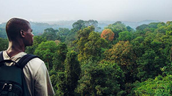 Mann blickt auf die Baumwipfel des Regenwaldes