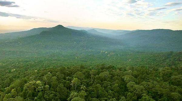 Regenwald in Kambdoscha