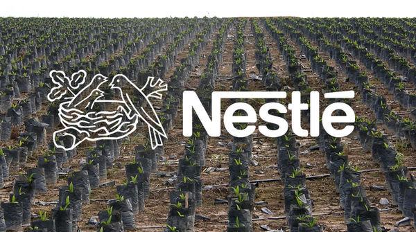 Palmöl Plantage - Nestlé Logo in Vordergrund