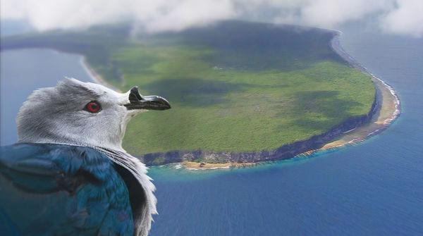 Tahiti-Taube  vor dem Makatea-Atoll vor