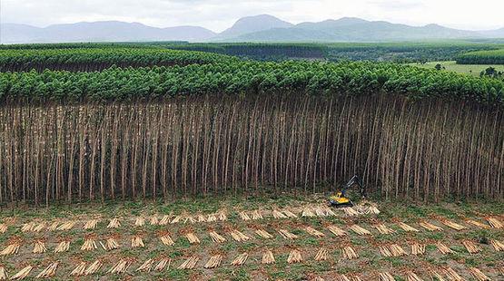 Luftbild: Ein Bagger fällt Bäume einer Plantage in Brasilien für die Herstellung von Zellstoff.
