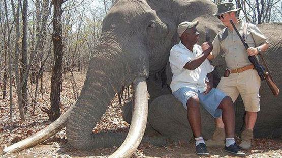 Ein deutscher Jäger neben dem Elefant, den er in Simbabwe erschossen hat
