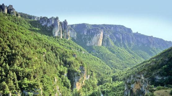 Ein bewaldetes Tal in Südfrankreich mit schroffen Felswänden