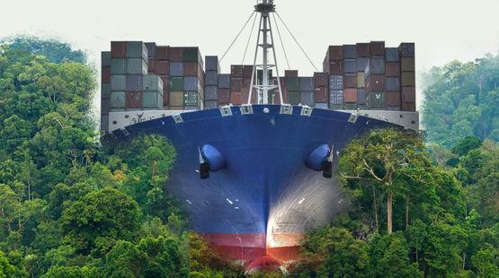 Ein Containerfrachter walzt den Regenwald platt