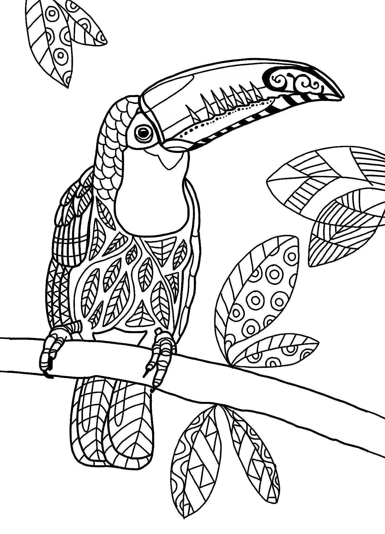der regenwald-shop - postkarte zum ausmalen - riesentukan